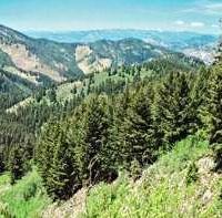 Ξεκληρίζει τα δάση η ανεξέλεγκτη υλοτομία – Πληθαίνουν τα κρούσματα στη Δ. Μακεδονία