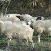 Πλήγμα για τους κτηνοτρόφους της Δυτ. Μακεδονίας οι χαμηλές θερμοκρασίες