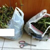 53χρονος καλλιεργούσε κάνναβη στον Άγιο Χριστόφορο Εορδαίας – Κατασχέθηκαν 2,5 κιλά φύλλα και 16 δενδρύλλια!
