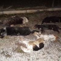 Άλλο ένα περιστατικό με 6 νεκρά σκυλιά αυτή τη φορά από φόλα στην Πτολεμαϊδα!