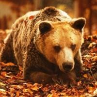 Πέθανε ο Ανδρέας, ο γηραιότερος αρκούδος του κόσμου στο καταφύγιο του Νυμφαίου Φλώρινας