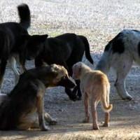 Έγινε κι αυτό: Πυροβόλησαν από μπαλκόνι σπιτιού στην Πτολεμαΐδα δύο σκυλιά!