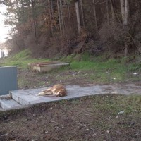 Ο δήμαρχος Γρεβενων επικηρύσσει με 2.000 ευρώ τους δολοφόνους αδέσποτων ζώων