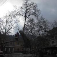 Κoπή επικίνδυνου Πλάτανου στην Κεντρική Πλατεία Σερβίων – Βίντεο