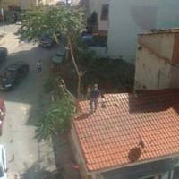 Κοζάνη: Άγνωστοι έκοψαν μεγάλα δέντρα κοντά στην πλατεία Αυλιώτη!