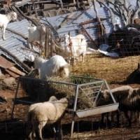 Τμήμα κτηνιατρικής Κοζάνης: Αιτήσεις οικονομικής αποζημίωσης για εντομοκτόνα σχετικά με την πρόληψη του καταρροϊκού πυρετού