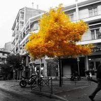 Η φωτογραφία της ημέρας: Φθινόπωρο στην Κοζάνη…
