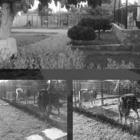 White Ghosts στην Κοζάνη: Για τη φιλοξενία του σκύλου σας και τη σωστή του εκπαίδευση!