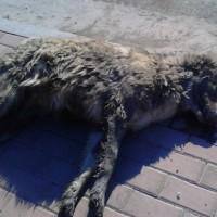 Πάνω από 40 τα νεκρά ζώα από τις φόλες στην Πτολεμαΐδα – Το μήνυμα των εθελοντών του Κυνοκομείου