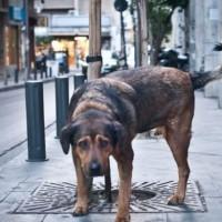 Τι ηλικία θα είχε ο σκύλος σας αν ήταν άνθρωπος; Καταρρίπτεται η ιδέα του ενός σκυλίσιου έτους να αντιστοιχεί σε επτά ανθρώπινα