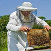 Ανακοίνωση του Κέντρου Μελισσοκομίας Δυτικής Μακεδονίας για την κατάθεση αιτήσεων των μελισσοκομικών δράσεων