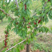 Κοινοβουλευτικές παρεμβάσεις του ΚΚΕ για τους καλλιεργητές φασολιών στην Καστοριά και για τις ζημιές από βροχοπτώσεις σε σιτηρά και κεράσια των χωριών των Γρεβενών