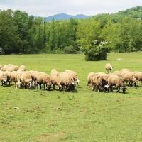 Ενημέρωση κτηνοτρόφων για την επιλέξιμη έκταση βοσκής που τους έχει κατανεμηθεί και τις σχετικές ενστάσεις