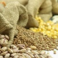 «Εκτίναξη» της καλλιέργειας οσπρίων στα 45.000 στρέμματα στη Δυτική Μακεδονία