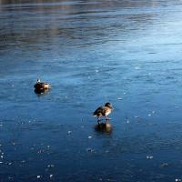 Παγωμένη οπτασία! Δείτε εκπληκτικές εικόνες από τη λίμνη της Καστοριάς