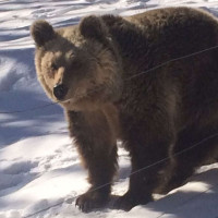 Είδαν χιόνι και… πήγαν για ύπνο οι αρκούδες στο Νυμφαίο της Φλώρινας – Δείτε φωτογραφίες