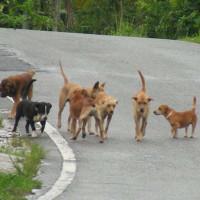 Νέα κρούσματα με φόλες στον Βαθύλακκο Κοζάνης – Στο στόχαστρο και οικόσιτα ζώα