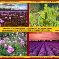 Ανάπτυξη στη Δυτική Μακεδονία: Μπορεί να έρθει με τη δημιουργία θερμοκηπίων και την καλλιέργεια αρωματικών φυτών; Του Σταύρου Καπλάνογλου