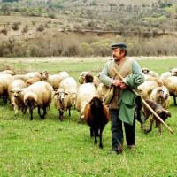 Η κτηνοτροφία στην Ελλάδα, ο δεύτερος κύριος τομέας της πρωτογενούς παραγωγής