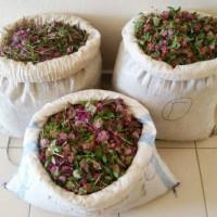 Άλλες δύο συλλήψεις Αλβανών στον Γράμμο με 20 κιλά αρωματικά φυτά