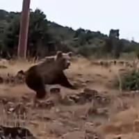 Βίντεο: Έβγαλε βόλτα τον σκύλο του στην Καστοριά και είδε τις αρκούδες μπροστά! Τι λέει ο ίδιος για το συμβάν