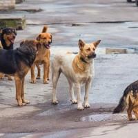 Επίθεση σκύλου σε μητέρα με το 5χρονο παιδί της στην Κοζάνη – Πολλά περιστατικά από το συγκεκριμένο ζώο στην περιοχή Πλατάνια