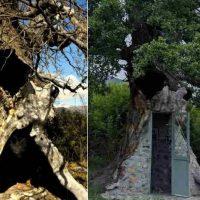 Γνωρίστε τη Δεντροκκλησιά του Αγίου Παϊσίου, το εκκλησάκι που χτίστηκε στο εσωτερικό ενός δέντρου, στο χωριό Αγία Βαρβάρα, κοντά στην Κόνιτσα