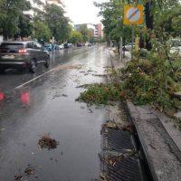 Καταρρακτώδης βροχή, χαλάζι και πτώσεις δέντρων στη Θεσσαλονίκη – Δείτε τα βίντεο