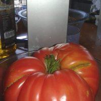 Και μετά τις πατάτες γίγας στην Κοζάνη… ντομάτα βάρους ενός κιλού! Δείτε φωτογραφία