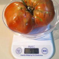 Ντομάτα βάρους 970 γραμμαρίων στο Πρωτοχώρι Κοζάνης – Δείτε φωτογραφία