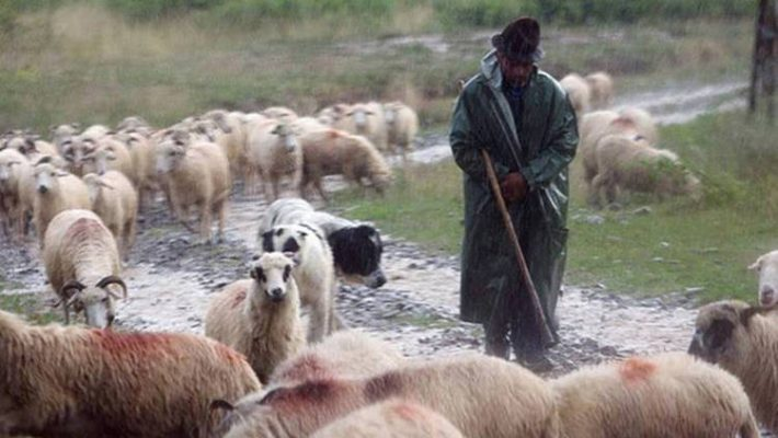 Κεραυνός σε κοπάδι προβάτων στην Κρυόβρυση Εορδαίας – Κινδύνεψε και ο κτηνοτρόφος