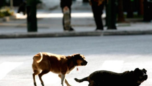 Σκυλιά επιτέθηκαν και δάγκωσαν γυναίκα στην Κοζάνη – Ο ιδιοκτήτης τους τα μάζεψε και κλειδώθηκε σπίτι του!