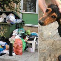 Σέρρες: Πρόστιμο 120.000 ευρώ στον άνδρα που πέταξε τέσσερα κουτάβια στα σκουπίδια!