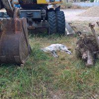 Νεκροταφείο ζώων ο χώρος των ΛΥΒ στη Σιάτιστα – Καταγγελία του Φιλοζωικού Συλλόγου Σιάτιστας – Δείτε φωτογραφίες