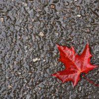 Φθινόπωρο ή άνοιξη; Της Ελένης Δεληβοριά