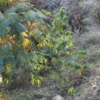 Πτολεμαΐδα: Συνελήφθη 45χρονος για καλλιέργεια και κατοχή ναρκωτικών – Κατασχέθηκαν και αρχαία αντικείμενα