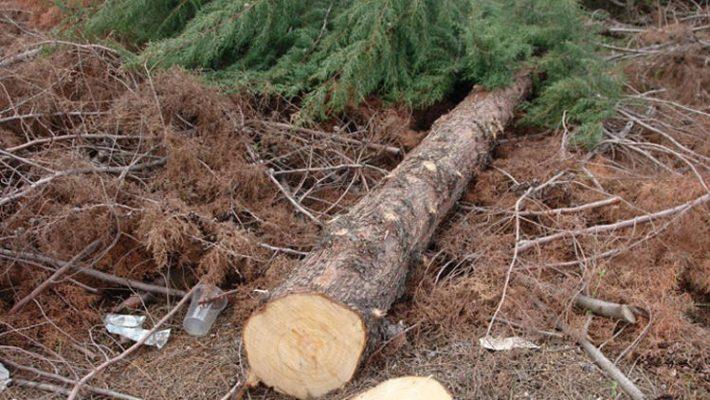 Καταπλακώθηκε από κορμό δέντρου και έχασε τη ζωή του ο άντρας στο Σκαλοχώρι Βοΐου
