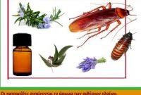 Κατσαρίδες: Η βιολογία τους, τρόποι καταπολέμησης και οι ασθένειες που προκαλούν – Της Τεχνολόγου – Γεωπόνου Μάρθας Καπλάνογλου