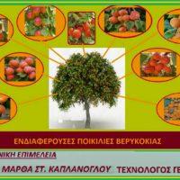 Ενδιαφέρουσες ποικιλίες βερικοκιάς – Της Τεχνολόγου Γεωπόνου Μάρθας Στ. Καπλάνογλου