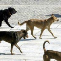 Επίθεση από έξι αδέσποτα σκυλιά σε ηλικιωμένο στη Σιάτιστα – Νοσηλεύεται στο νοσοκομείο