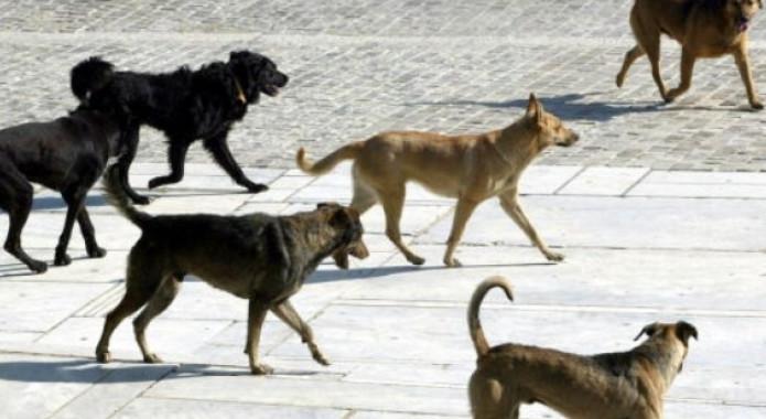 Κοζάνη: Επίθεση δεκάδων αδέσποτων σκυλιών σε διερχόμενο άντρα και στον σκύλο του στα Κρεβατάκια! Μισοφαγωμένος από την επίθεση ο σκύλος του κατοίκου