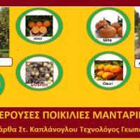 Ποικιλίες μανταρινιών και τα χαρακτηριστικά τους – Της Γεωπόνου Μάρθας Στ. Καπλάνογλου