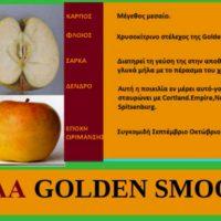 Οι ποικιλίες μηλιάς που καλλιεργούνται στην Ελλάδα – Της Μάρθας Καπλάνογλου