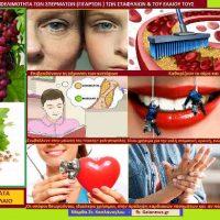 Η ωφελιμότητα των σταφυλιών με σπέρματα και οι αντίστοιχες ποικιλίες – Της Γεωπόνου Μάρθας Καπλάνογλου