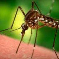 Ενημέρωση του ΚΕΕΛΠΝΟ για την προστασία από τα κουνούπια