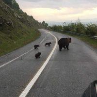 Αποκεντρωμένη Διοίκηση Ηπείρου-Δυτικής Μακεδονίας: Μέτρα προφύλαξης από άγρια ζώα ιδιαιτέρως αρκούδας
