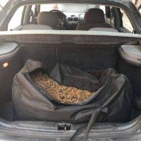 Συνελήφθη 68χρονος στην Καστοριά να μεταφέρει πάνω από 12 κιλά ακατέργαστης κάνναβης