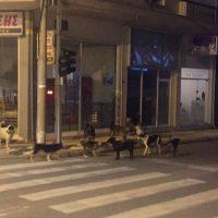 Οι φωτογραφίες της ημέρας: Οι αγέλες των αδέσποτων σκυλιών στην Κοζάνη