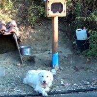 Ο «Χάτσικο» της Ναυπάκτου: Ζει 1,5 χρόνο δίπλα στο εικόνισμα του ιδιοκτήτη του – Δείτε το βίντεο