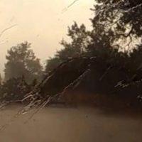Ο καιρός τρελάθηκε: Στη Λάρισα ξεριζώθηκαν δέντρα από τον αέρα – Βίντεο